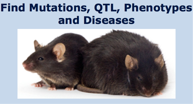 Phenotypes, Alleles & Disease Models Search