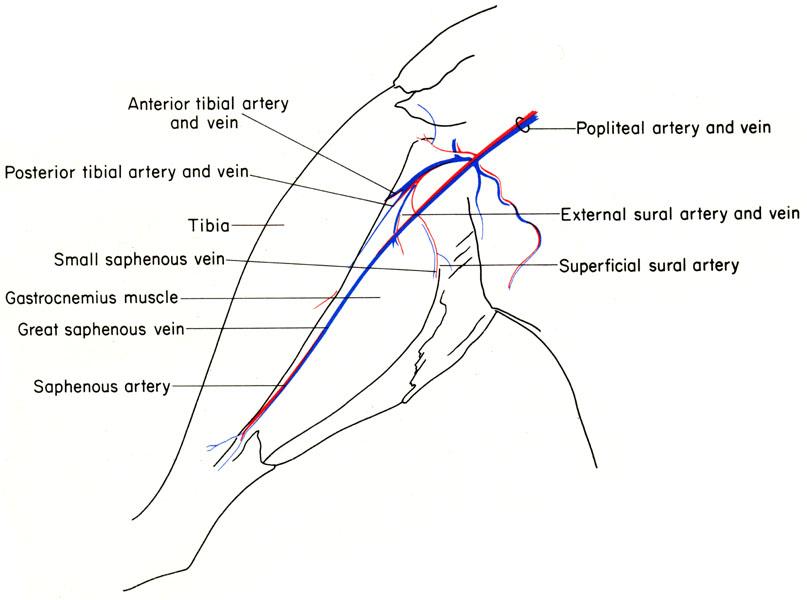 Atemberaubend Maus Anatomie Diagramm Fotos - Menschliche Anatomie ...