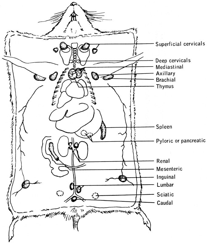 Figure13 4 on spleen diagram