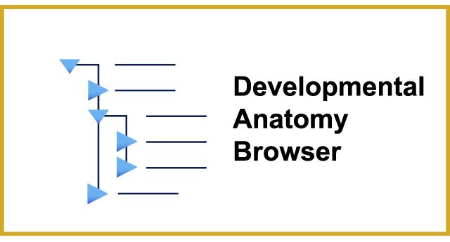 GXD Anatomy Browser Link