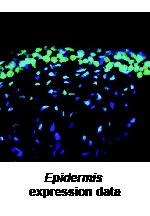 Expression + Recombinase Comparison Matrix