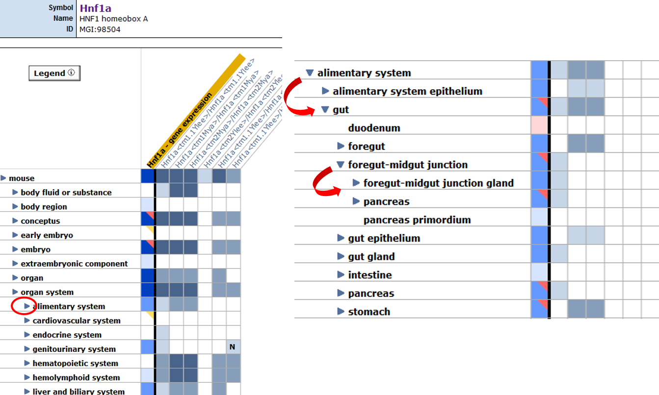 Expression + Phenotype Matrix