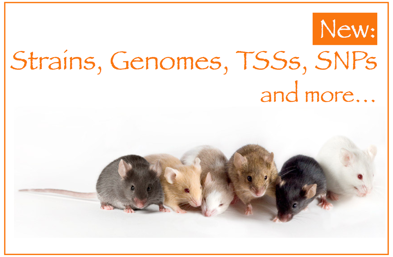 8d0aabf531a MGI-Mouse Genome Informatics-The international database resource for the  laboratory mouse