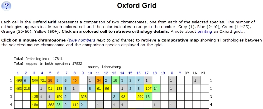 Mouse-Human Oxford Grid