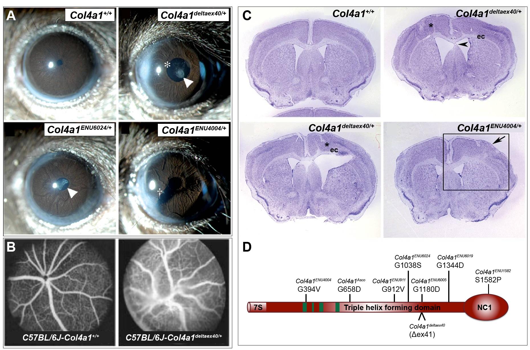 Spotlight on mouse models of human disease