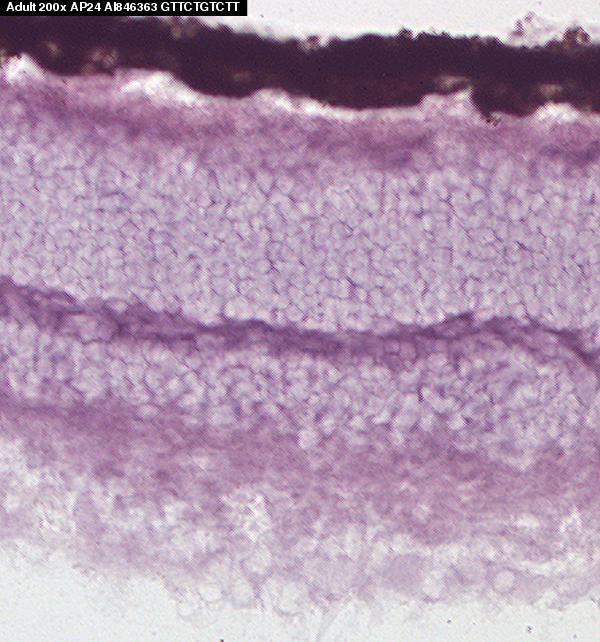 Hadh MGI Mouse Gene Detail - MGI:96009 - hydroxyacyl